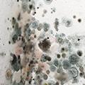 1-mold